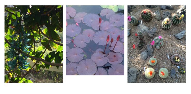 植物セット